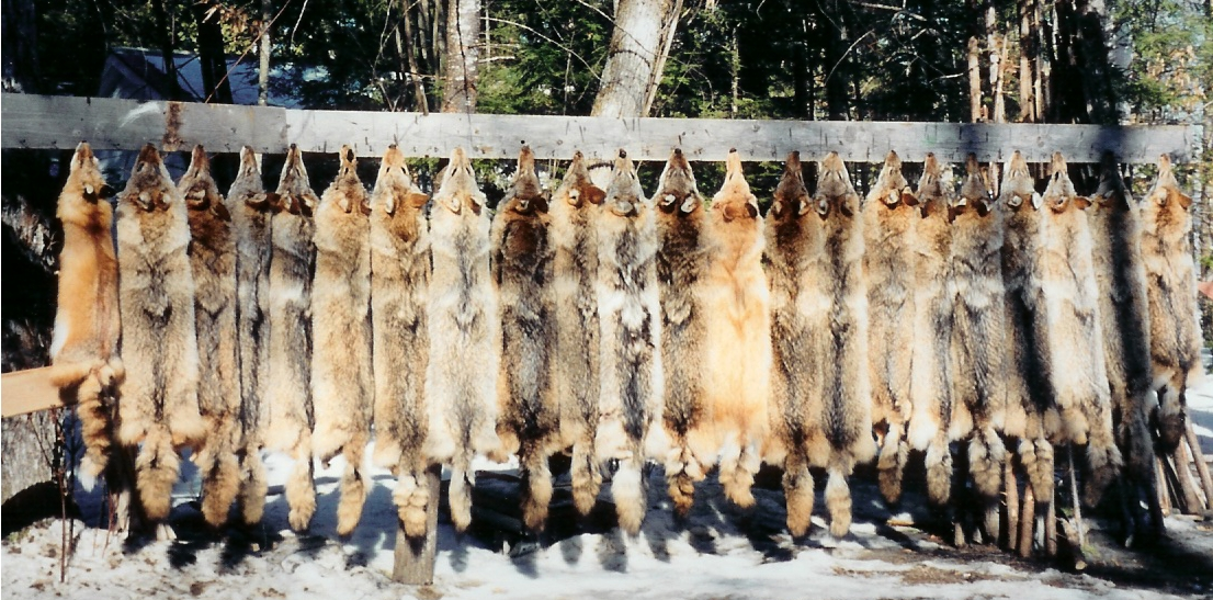 Exposing the Myths: Truth about Trapping