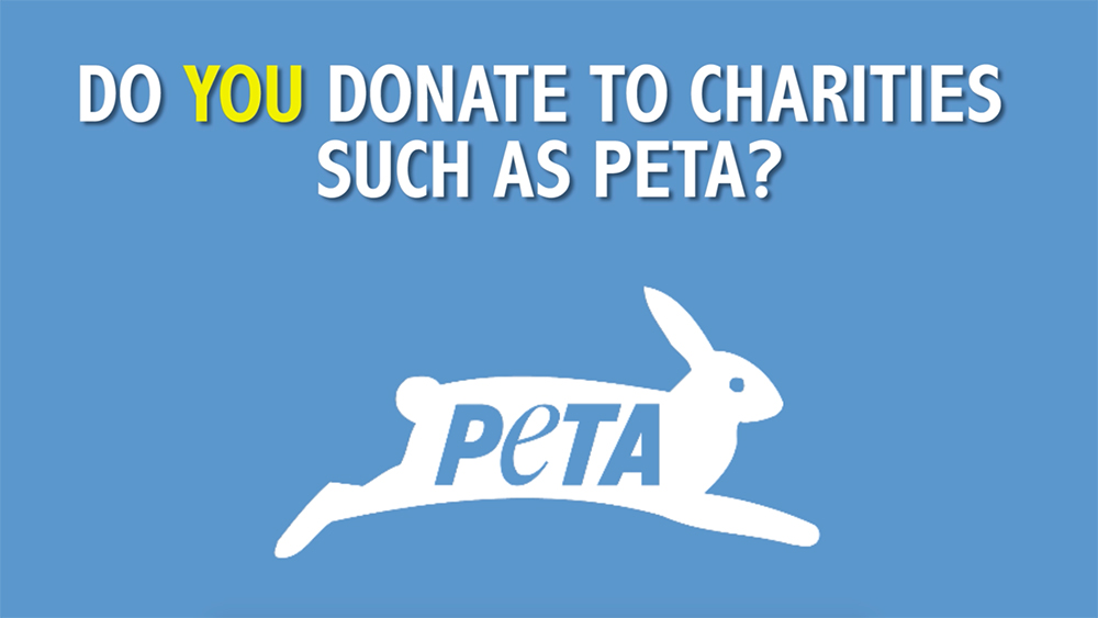 How PETA DE wastes your money on salaries and obscene PR stunts