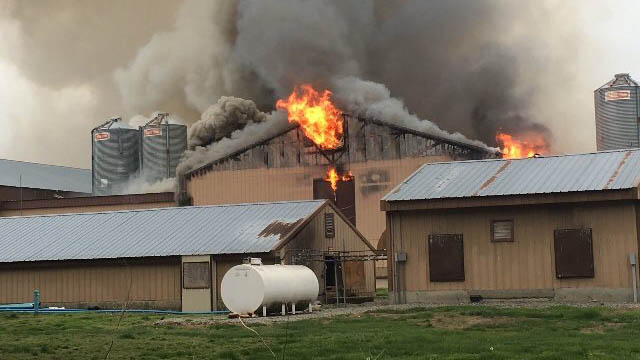 Chicken farm in flames