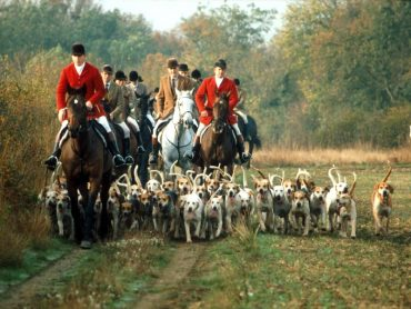 fox hunting, ban, animal rights, animal welfare, foxes, hupocricy