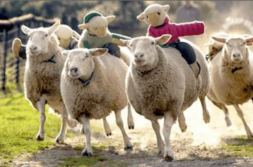 animal rights, animal rights activists, animal welfare, real faces of animal rights, sheep race