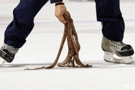 ice hockey, octopus, PETA, hockey fans, animal rights, animal rights activists, animal welfare, real faces of animal rights