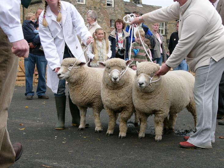 animal rights, animal rights activits, animal rights demosntrations, real faces of animal rights, animalwelfare sheep, sheep fair