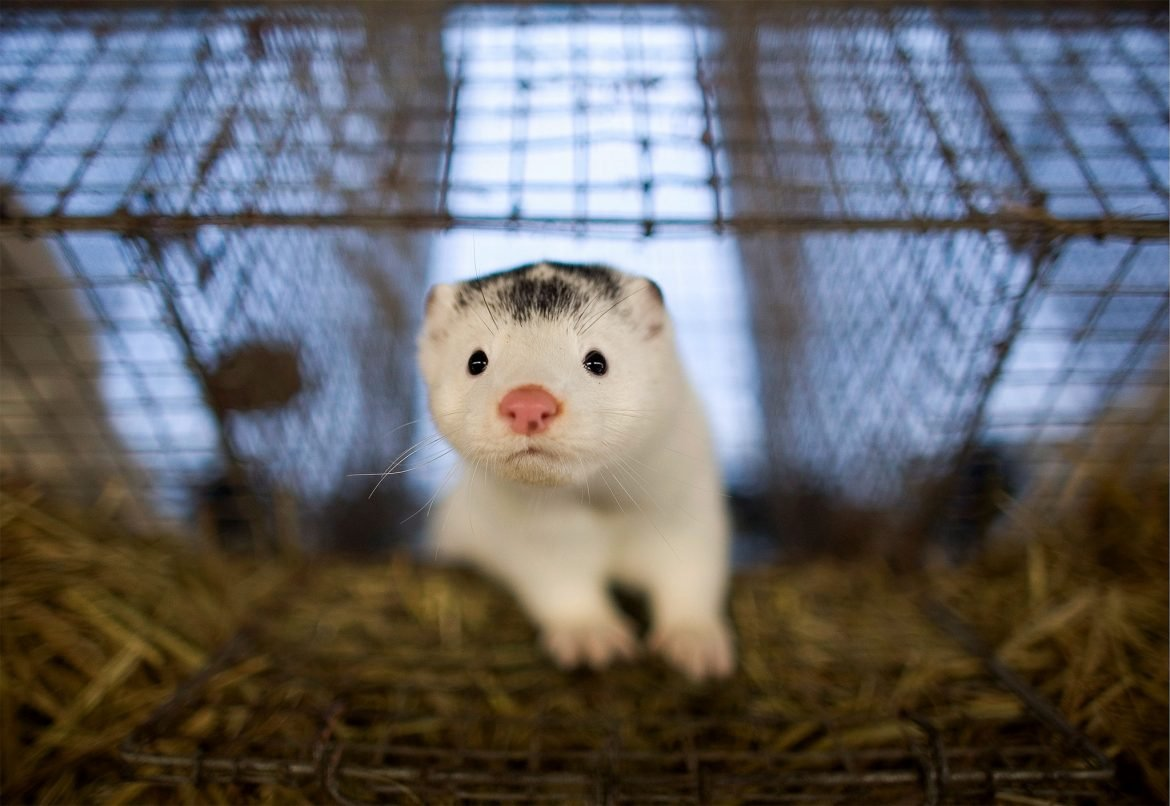 fur farms, animal rights, animal rights activists, animal welfare , fur, releae, US