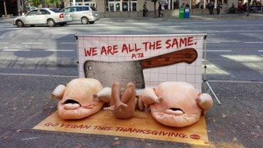 turkey, thanksgiving, animal rights, animal rights activists, PETA , PETAkills, nudity, naked protests