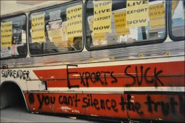 animal rights, live export, animal rights activists, animal welfare, livestock, UK