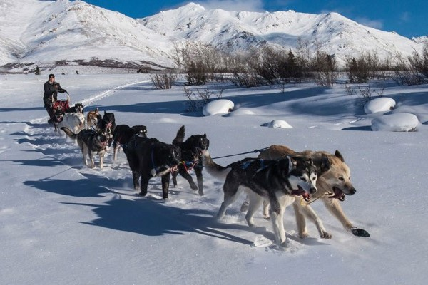 sledges, kennel, alaska, dog racing , PETA