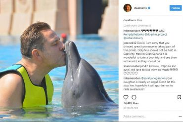 David Walliams, dolphin, comedian, animal rights activists , animal rights protesters, animal welfare , animal rights