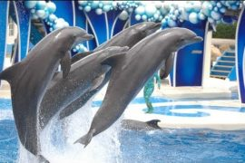 animal rights activists, Shirahama , animal park, Adventure World animal park, Taiji